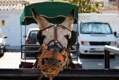 Asno em Mijas A Andaluzia, Espanha Fotos de Stock Royalty Free
