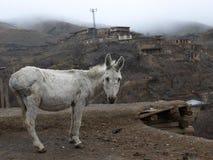 Asno na vila Kang, Irã do nordeste Foto de Stock Royalty Free