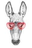 Asno no amor! Retrato do asno com óculos de sol Imagens de Stock Royalty Free
