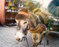 Asno no mercado da manhã Imagens de Stock Royalty Free