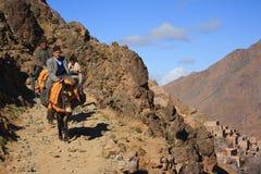 Asnos no trajeto em montanhas de Altas, Marrocos Imagens de Stock