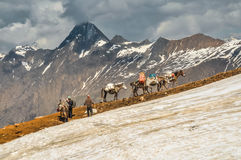 Asnos nos montes em Nepal Imagem de Stock Royalty Free