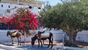 Asnos o símbolo da ilha de Santorini imagens de stock