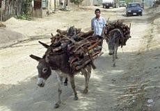 Asnos que levam a lenha na estrada de terra, Nicarágua Fotografia de Stock