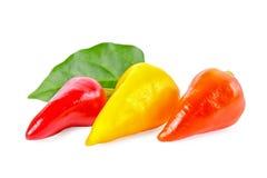 Asortowana dekoracyjna czerwień, kolor żółty, pomarańcze pieprzy Capsicum Gemeng Obrazy Stock