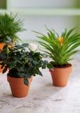 Asortowane rośliny w garnkach na stole Fotografia Stock