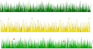 asortowane trawy Zdjęcie Royalty Free