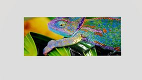 Asortowani Embossed jaszczurka wizerunki Zdjęcie Stock