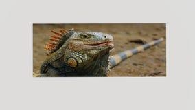 Asortowani Embossed jaszczurka wizerunki Fotografia Stock