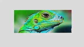Asortowani Embossed jaszczurka wizerunki Obraz Royalty Free