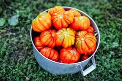 Asortowani pomidory w brown papierowych torbach Różnorodni pomidory w pucharze fotografia stock