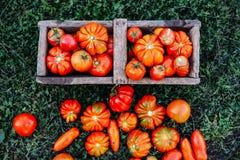 Asortowani pomidory w brown papierowych torbach Różnorodni pomidory w pucharze obraz royalty free