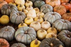 Asortyment kolorowe banie Wielki jesienny Obrazy Royalty Free
