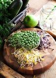 Asortyment mikro zielenie Narastający kale, alfalfa, słonecznik, ar zdjęcie stock