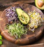 Asortyment mikro zielenie Narastający kale, alfalfa, słonecznik, ar zdjęcie royalty free