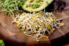 Asortyment mikro zielenie Narastający kale, alfalfa, słonecznik, ar fotografia stock
