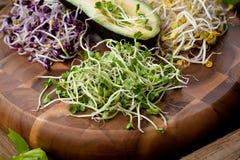 Asortyment mikro zielenie Narastający kale, alfalfa, słonecznik, ar zdjęcia stock