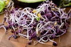 Asortyment mikro zielenie Narastający kale, alfalfa, słonecznik, ar fotografia royalty free