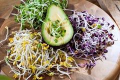 Asortyment mikro zielenie Narastający kale, alfalfa, słonecznik, ar obrazy royalty free