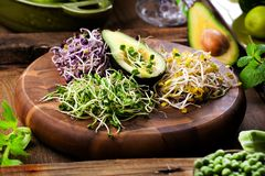 Asortyment mikro zielenie Narastający kale, alfalfa, słonecznik, ar obraz royalty free