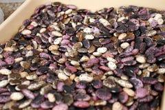 Asortyment stubarwne fasole, kolorowy haricot fasoli tło, odgórny widok Różnorodne wysuszone legume fasole dla tła Wallpape fotografia stock