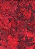 asortymentu płomienny liść klon Zdjęcie Royalty Free
