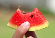 łasowania melonu woda Obraz Stock