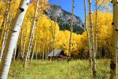 Asp- färg för trädnedgånglövverk i Colorado Royaltyfria Bilder