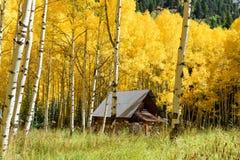 Asp- färg för trädnedgånglövverk i Colorado Fotografering för Bildbyråer