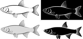 Asp. Fish - clip art illustration and line art Stock Images