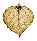 asp- leaf Royaltyfri Fotografi