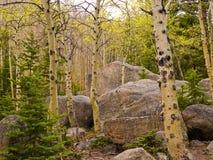 Asp och stenblock Arkivbilder