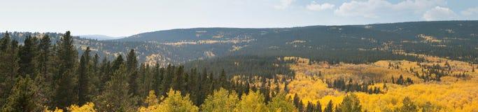 Asp- panorama Arkivfoto