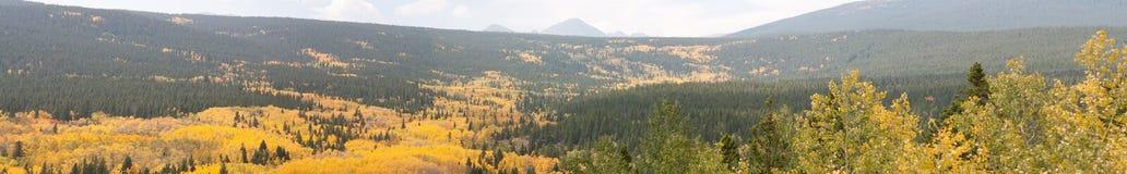 Asp- panorama Arkivbilder