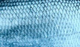 Asp scales, toned image. Asp fish scales, natural texture, toned Stock Photo