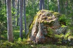 Asp- skog i den tidiga våren Royaltyfri Foto
