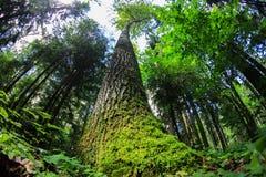 Asp- träd i mitt av skogen på en solig sommardag royaltyfria foton