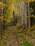 asp- trail Arkivfoton