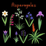 Asparagales plant order Royalty Free Stock Images