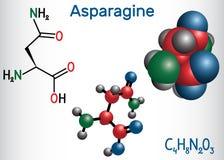 Asparaginc$l-asparagin, Asn, n-Aminosäuremolekül Es IS-IS verwendete in der Biosynthese von Proteinen Strukturelle Chemikalie lizenzfreie abbildung