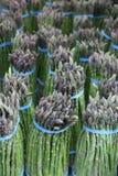 Asparago Fotografia Stock