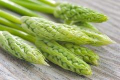 Asparago fresco Immagine Stock Libera da Diritti