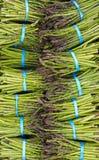 Asparagras op vertoning Royalty-vrije Stock Foto