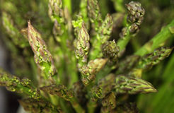 Asparagus. Selective focus shot of asparagus. Delicious royalty free stock photo