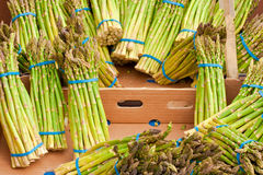 Asparagus. Fresh asparagus for sale at a country market Royalty Free Stock Photo