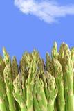 Asparagus. Healthy asparagus isolated on a sky background Royalty Free Stock Photography