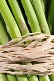 Asparagus 5 stock photography