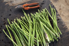 Asparagus in asia. Asparagus on wooden table in thailand Stock Photography