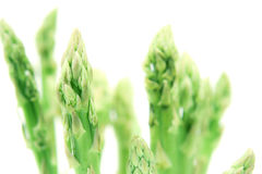 The Asparagus bind with brown ribbon on white background Stock Photos