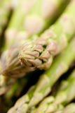 Asparagus bunch Royalty Free Stock Image